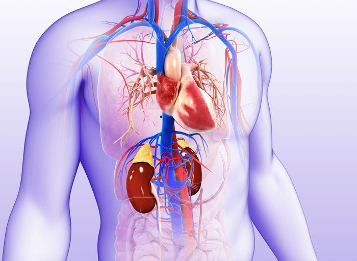 بررسی رابطه بین بیماری قلبی و کلیه