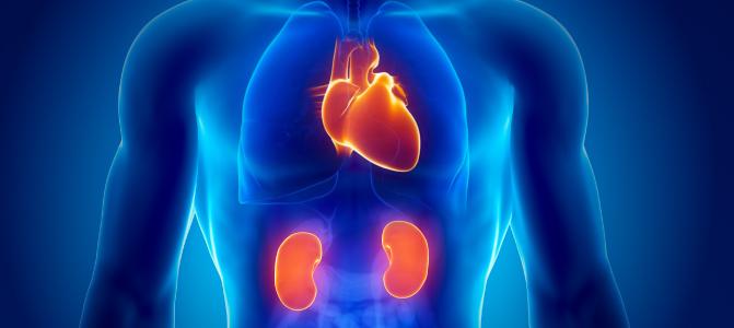 بیماری قلبی می تواند مشکلات کلیه را ایجاد کند