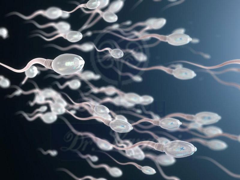 تحرک اسپرم چیست ؟ تحرک اسپرم چگونه بر روی باروری تاثیر می گذارد؟