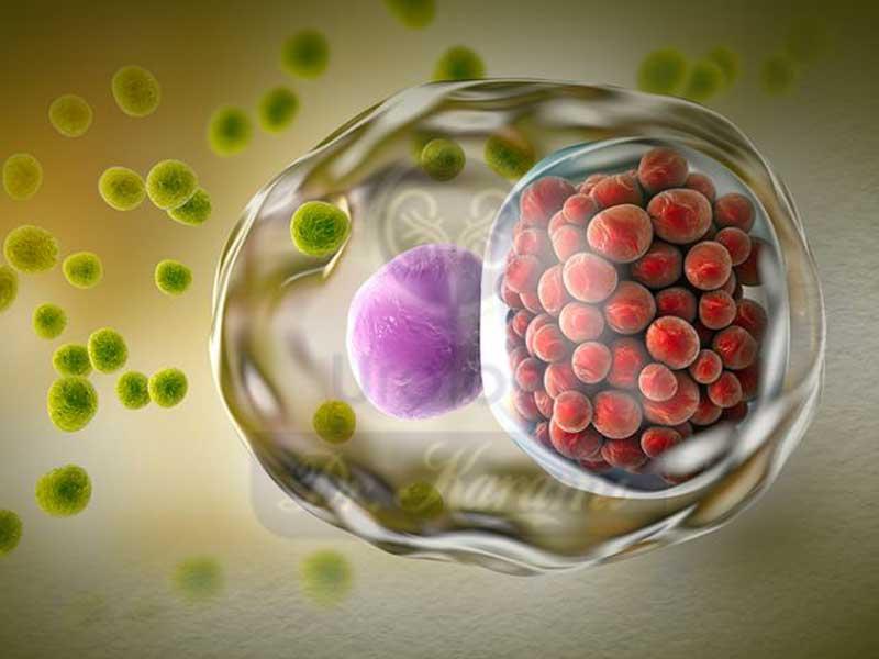 بیماریهای مقاربتی : انواع ، علائم ، تشخیص و درمان